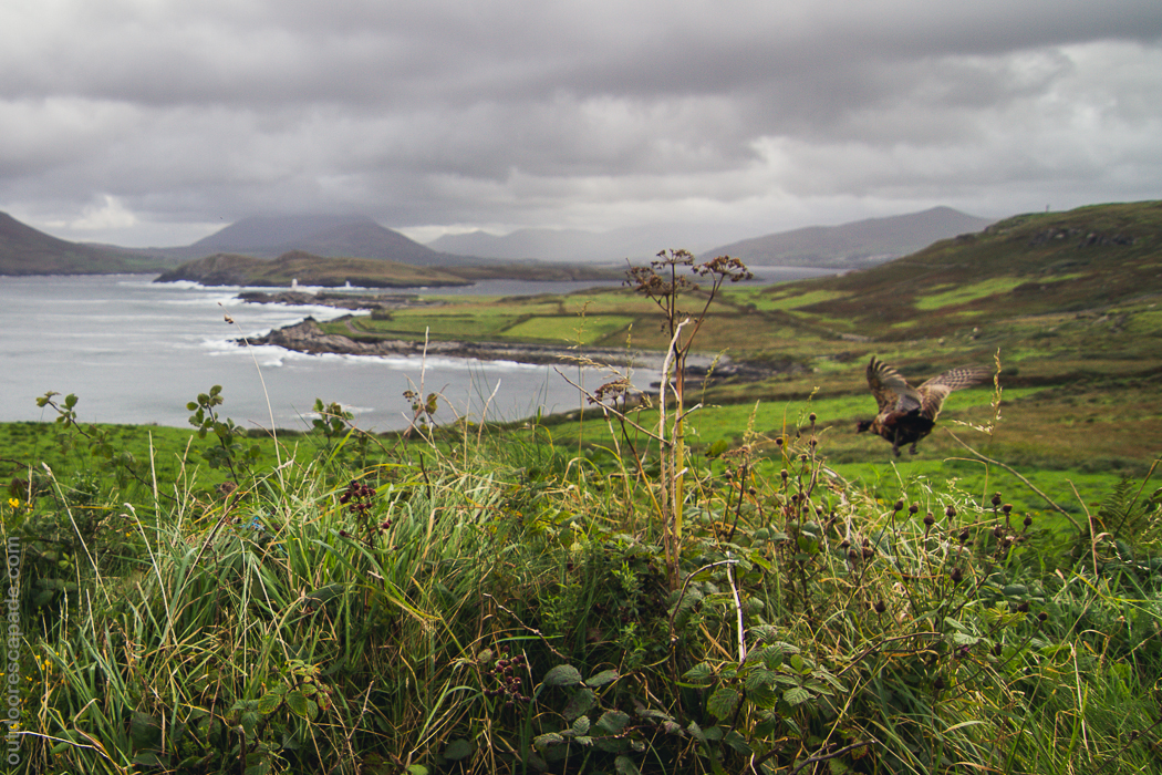 Is Ring Of Kerry Worth Seeing