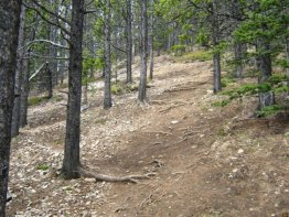 Probably the hardest part of the trail as it is the steepest section.
