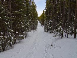 A nice wide dual track trail allows you to snowshoe beside your friends.