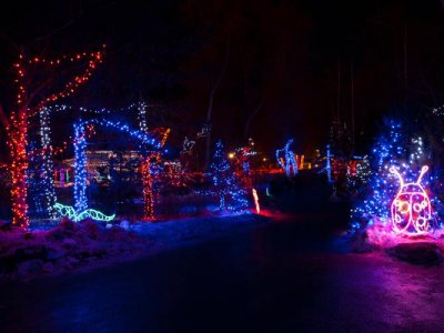 attractions/calgary-zoolights/calgary-zoolights-11.jpg