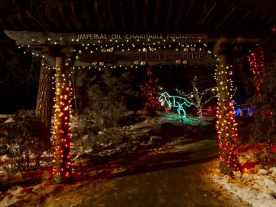 attractions/calgary-zoolights/calgary-zoolights-14.jpg