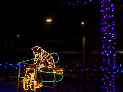 attractions/calgary-zoolights/calgary-zoolights-4.jpg