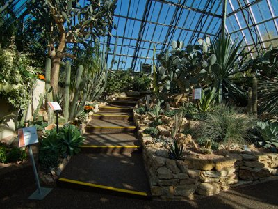 attractions/muttart-conservatory/muttart-conservatory-9.jpg