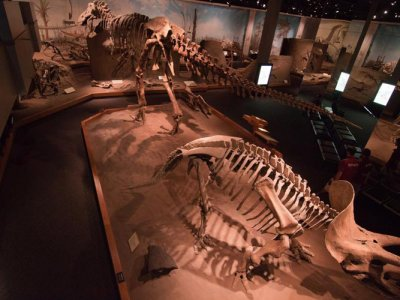 attractions/royal-tyrrell-museum/royal-tyrrell-museum-9.jpg