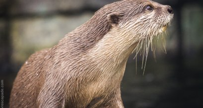 A charming looking otter